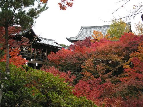 ☆東福寺通天橋の紅葉①