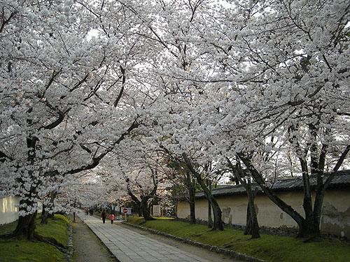 ☆醍醐寺参道