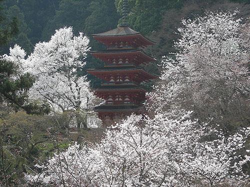 ☆長谷寺と五重塔②