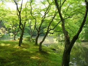 京都植物園①