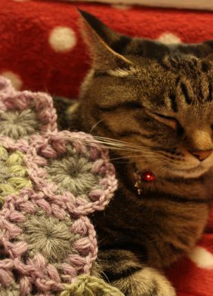 毛糸と猫1
