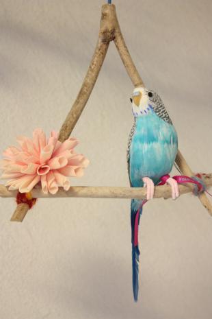 小鳥ちゃん3