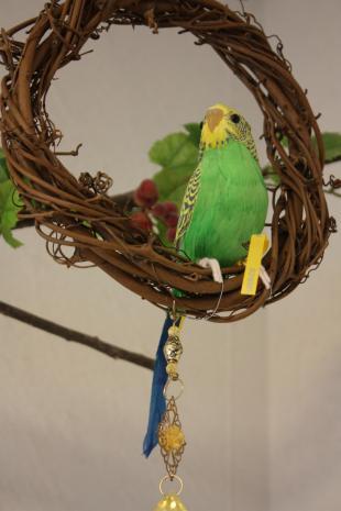 小鳥ちゃん2
