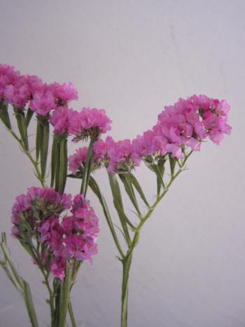 お花の飾り3