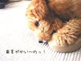 1220_2.jpg