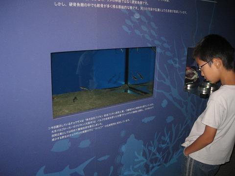 フジキンのサメ博3