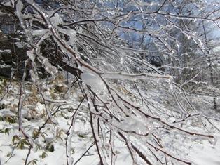 雨氷の枝(ブログ用)