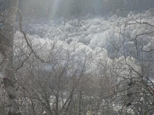初霧氷(ブログ用)