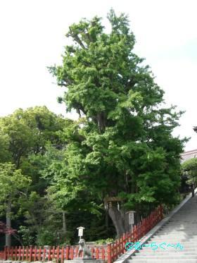 鶴が丘八幡宮