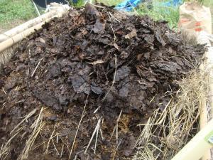 堆肥作り1