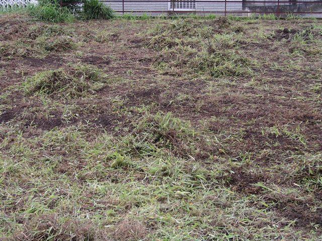 苅った草を集めます