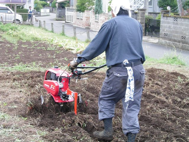 草を根っこから集めます