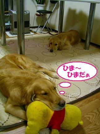 SANY0001_20081229135629.jpg