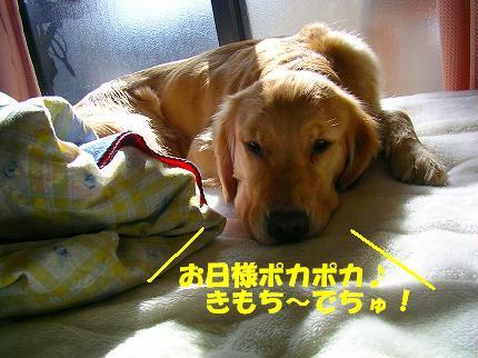 SANY0001_20090123171815.jpg