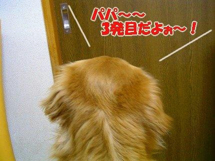 SANY0001_20090211181505.jpg