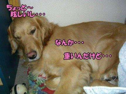 SANY0002_01_20090416064759.jpg