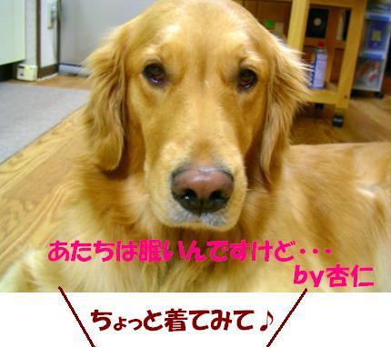 SANY0002_20081226114726.jpg