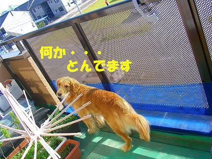 SANY0002_20090116093331.jpg