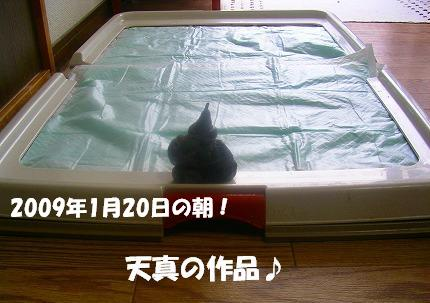 SANY0002_20090121010240.jpg