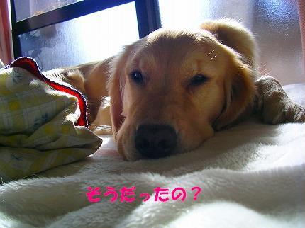 SANY0002_20090123172006.jpg