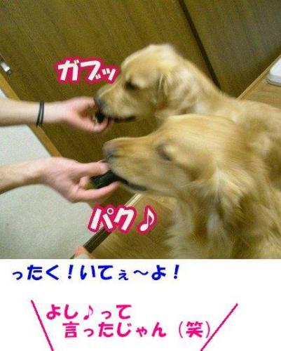 SANY0002_20090204004426.jpg