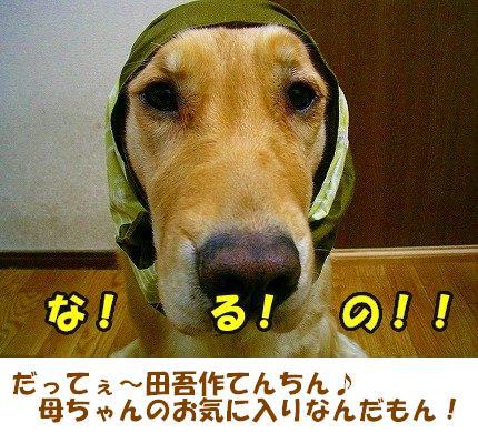 SANY0003_01.jpg