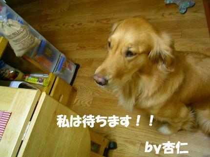 SANY0003_20081222192943.jpg