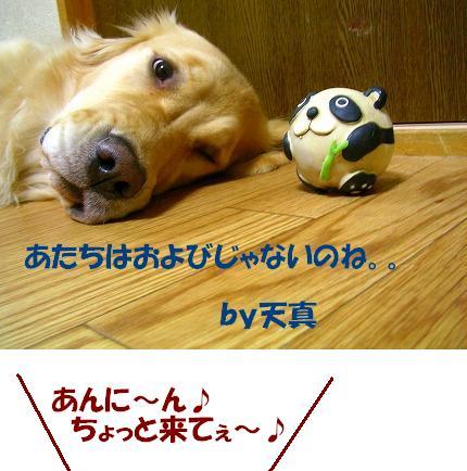 SANY0003_20081226114743.jpg