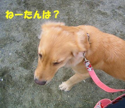 SANY0003_20090119072738.jpg