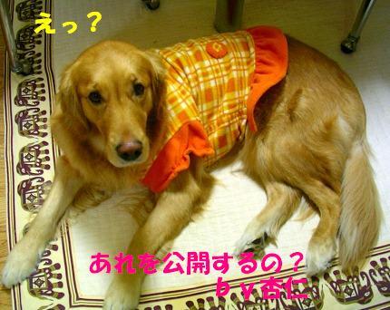 SANY0003_20090121010145.jpg