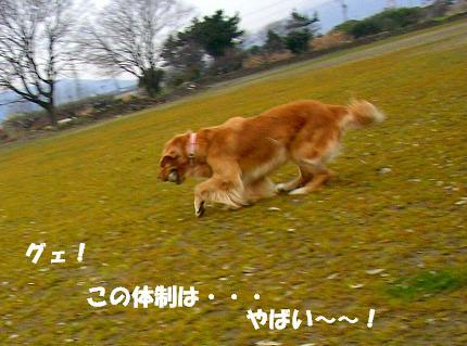 SANY0003_20090121222257.jpg