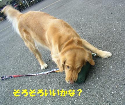 SANY0003_20090127165023.jpg