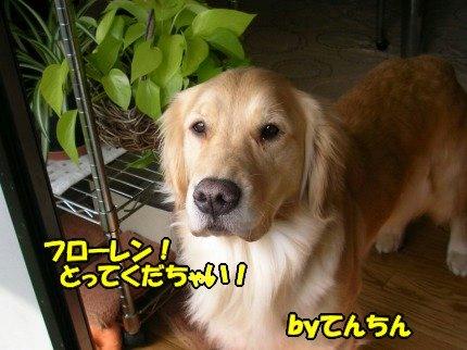 SANY0003_20090317184435.jpg