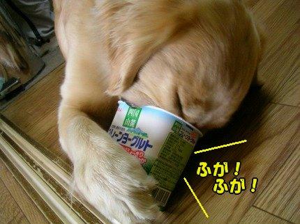 SANY0003_20090408001023.jpg