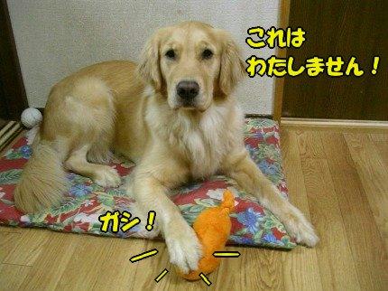 SANY0003_20090427103435.jpg