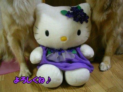 SANY0003_20090624055608.jpg