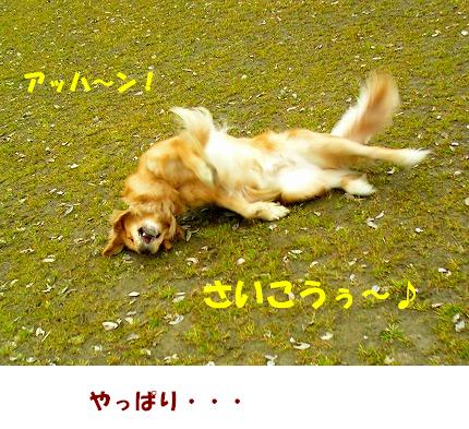 SANY0004_20090121222305.jpg