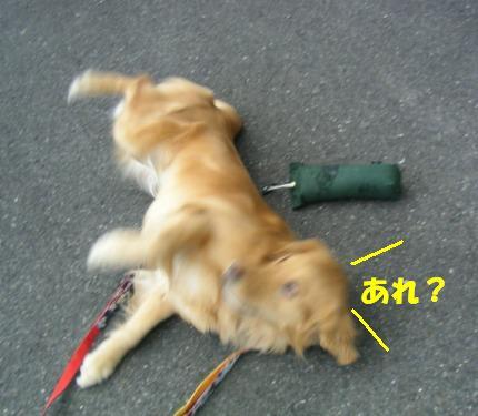 SANY0004_20090127165032.jpg