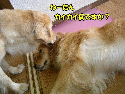 SANY0004_20090630002933.jpg
