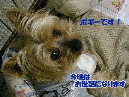SANY0005_01.jpg