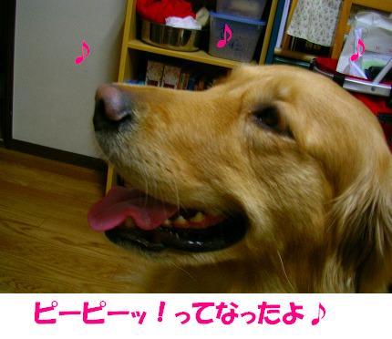 SANY0005_20081222193054.jpg