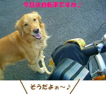 SANY0005_20090108173558.jpg