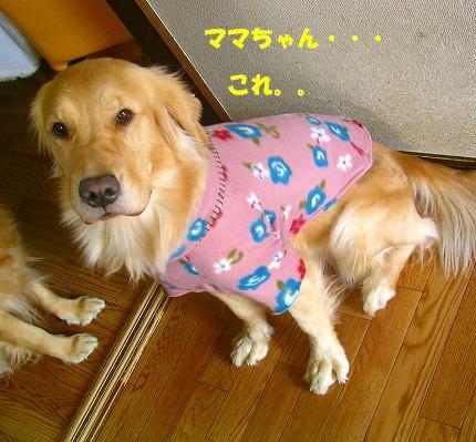 SANY0005_20090117141211.jpg