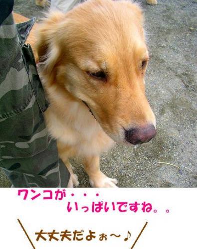 SANY0005_20090119072729.jpg