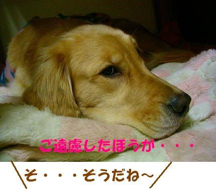 SANY0005_20090121010219.jpg