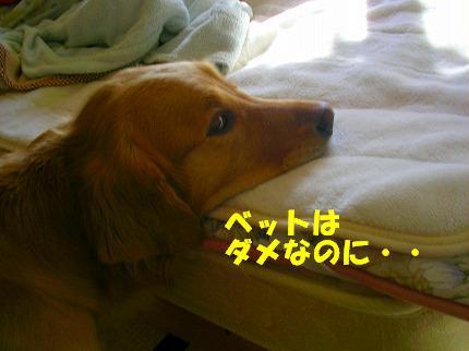 SANY0005_20090123171856.jpg