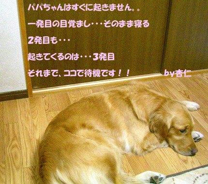 SANY0005_20090211181457.jpg
