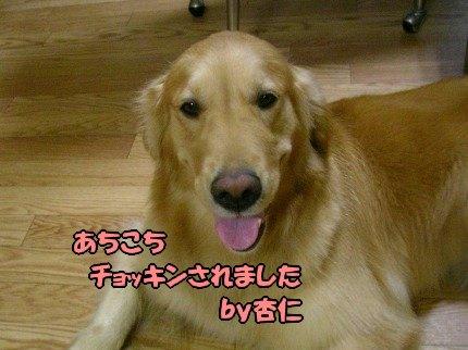 SANY0005_20090718213345.jpg