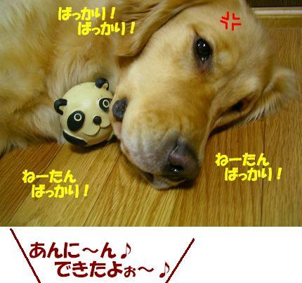 SANY0006_20081226114809.jpg