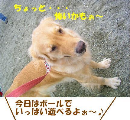 SANY0006_20090119072747.jpg